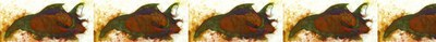 atahualpa_header_07-1024x100.jpg