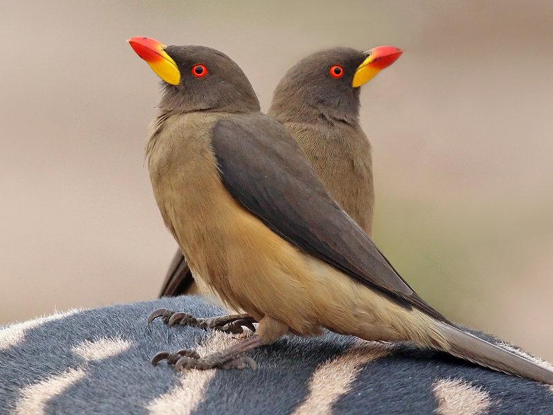 Liberar dos pájaros de un tirón