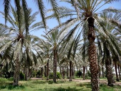palmeras.jpeg