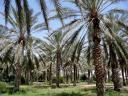 palmeras.thumbnail.jpeg