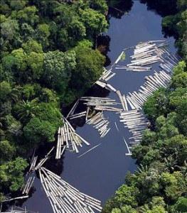 amazonia-263x300.jpg