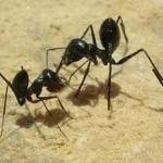 hormigas-150x150.jpg
