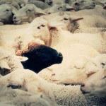 oveja-negra-150x150.jpg