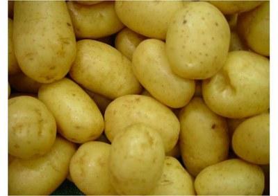 patatas.jpg