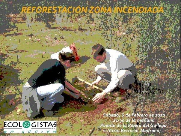 plantacion-berrocal.jpg