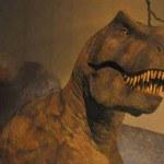 tiranosaurio-150x150.jpg