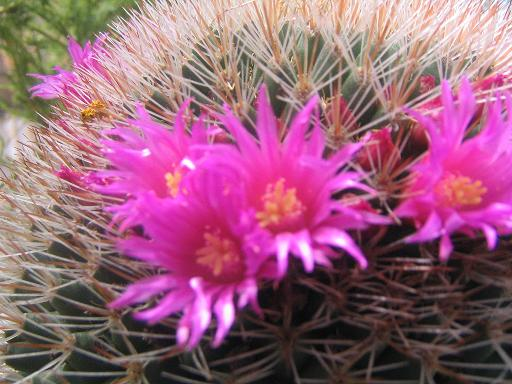 dia-isla-cristina-ycasa-cactus-051.jpg