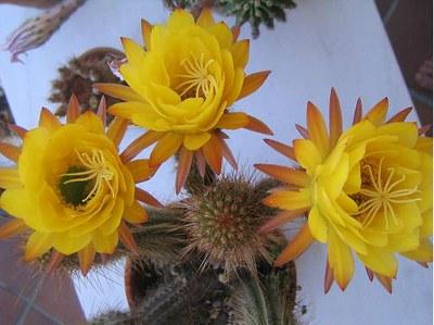 zoo-marine-y-cactus-junio-2006-037.jpg